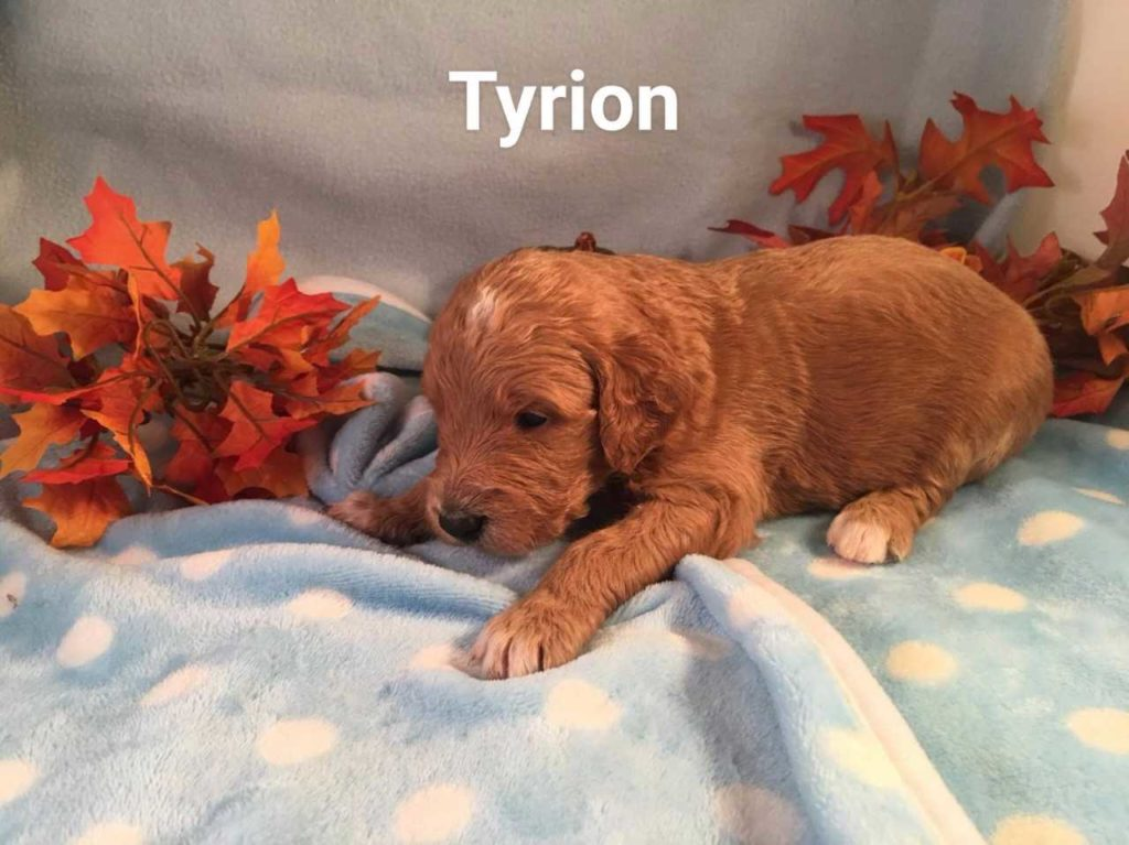 Tyrions3.5